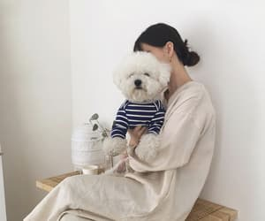 dog, korean, and white image