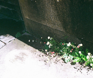 california, film, and flower image