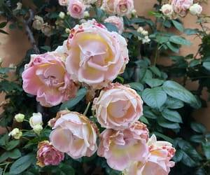 lovely, romantic, and rose image