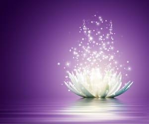 flower, light, and lotus image