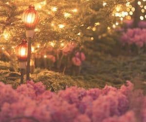 fairytale, flowers, and lights image