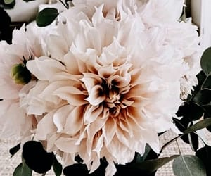 aesthetic, flowers, and photography image