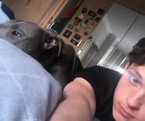 spiderman, dog, and tom holland image