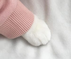 cat, cute, and pink image