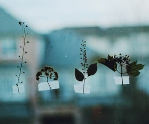 plants, flowers, and indie image