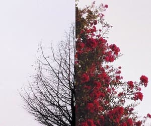 autumn, red, and rose image