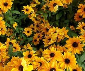 flowers, sun, and sunflower image