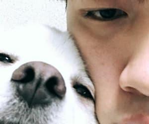 puppy, love, and shin hyosub image