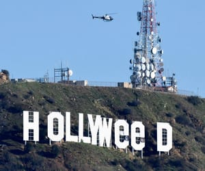 california and hollyweed image