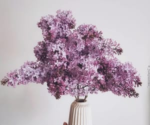 lilacs, bouquet, and flowers image