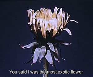 gif, flowers, and quotes image