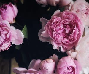 bouquet, pink, and pink peonies image