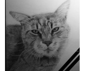 animal, graphite, and derwent image