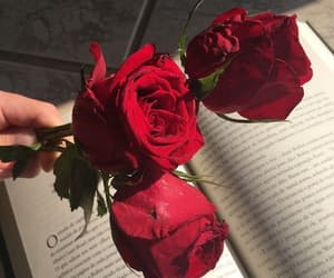rose, red, and book image