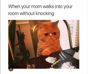 cat, funny, and memes image