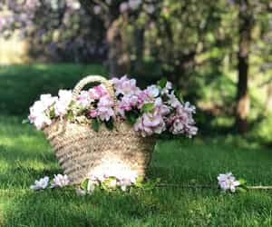 basket, cherry blossom, and photography image