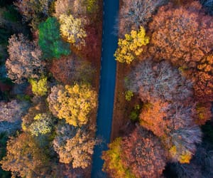 autumn, drive, and fall image