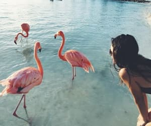 flamingos, girl, and pink image