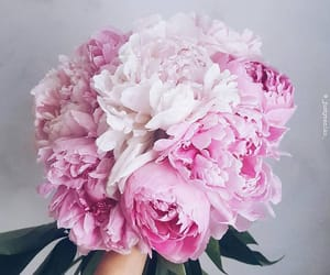 peonies, bouquet, and pink image