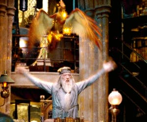 albus dumbledore, gif, and harry potter image