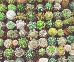 cactus, green, and succulents image