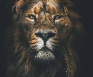 lion and wild image
