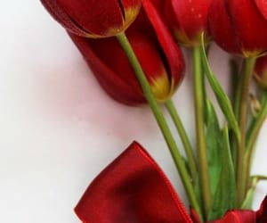 belleza, flores, and tulipanes image