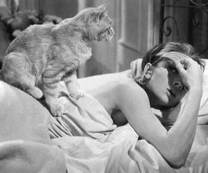 audrey hepburn, cat, and movie image