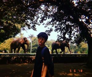 blah, elephant, and huji image