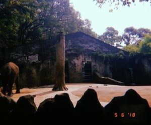 animals, hujicam, and huji cam image