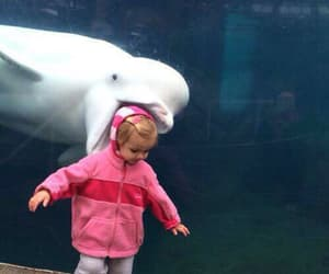 funny, dolphin, and animal image