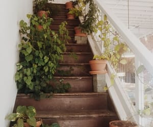 plants, aesthetic, and stairs image