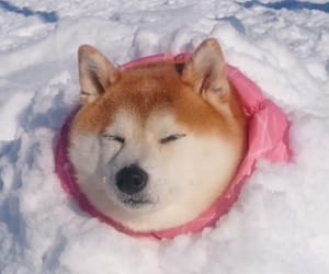 dog, snow, and japan image