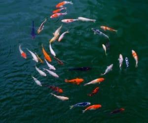 ocean and fish image