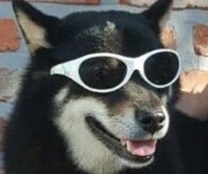 black, crazy, and dog image