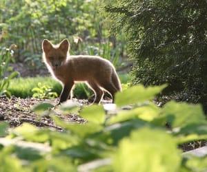 Animales, zorro, and bosque image