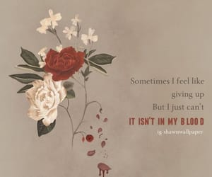 blood, shawn mendes, and feeling image
