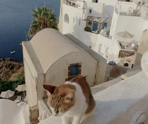 architecture, cat, and city image