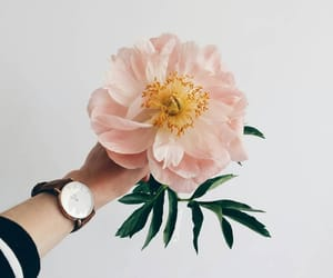 flowers, rose gold, and light pink image