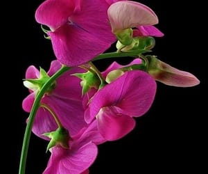 flor, naturaleza, and primavera image