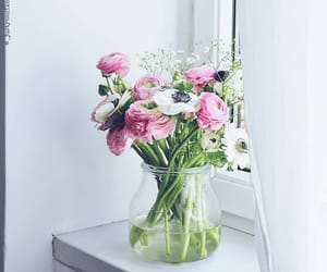 anemones, pink, and white image