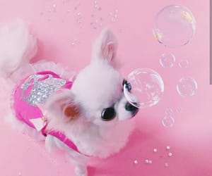 adorable, bubbles, and dog image