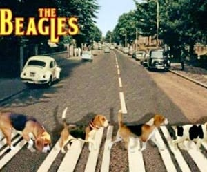 abbey road, beatles, and cute dogs image