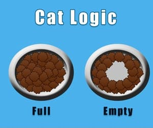 lolcat, funny cats, and cats image