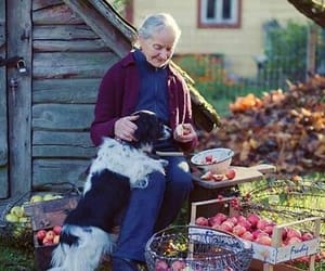 apples, old, and dog image
