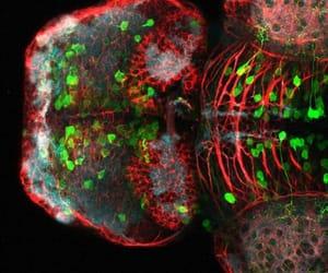 bio, fish, and science image