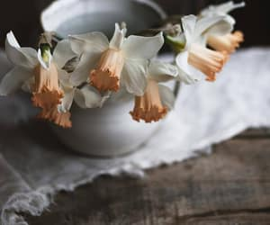 flowers, narcissus, and nature image