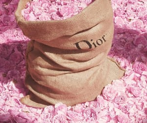 dior, pink, and rose image