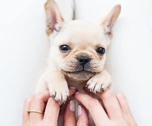 cutie, pet, and puppy image