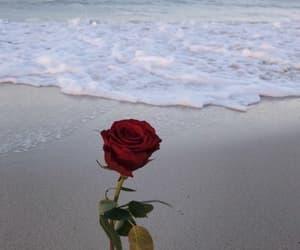 rose, sea, and beach image